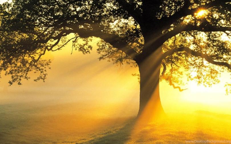 Жельветро_корни человека_почему важно помнить родственников