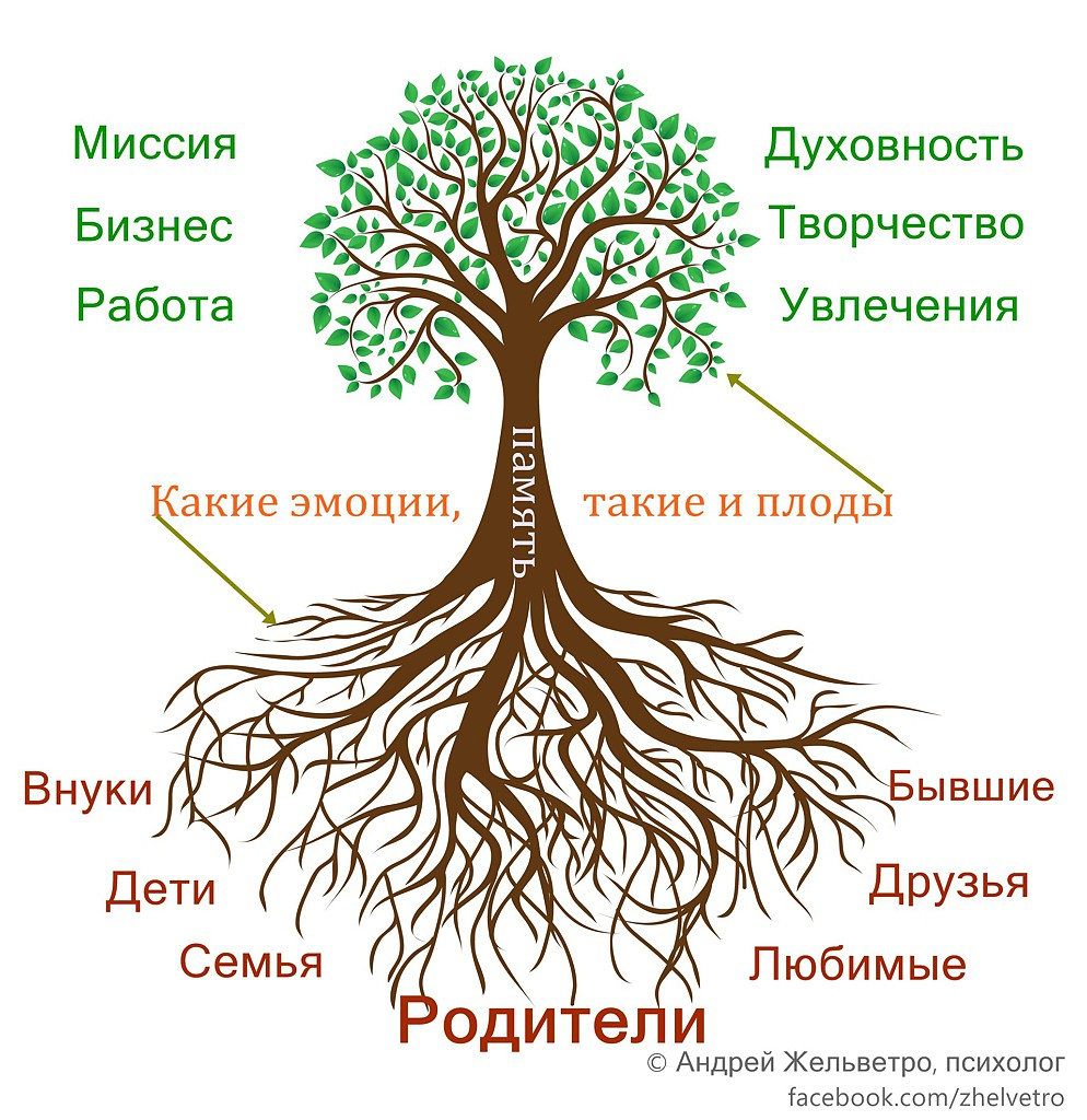 Человек и дерево. Корни и плоды